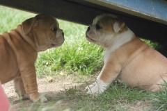 Puk en Daisy
